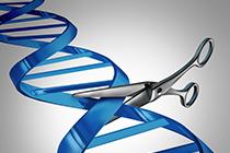 Synthego - CRISPR-Cas9