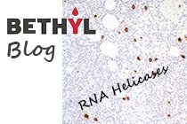 RNA helicases
