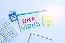 RNA SARS-CoV-2
